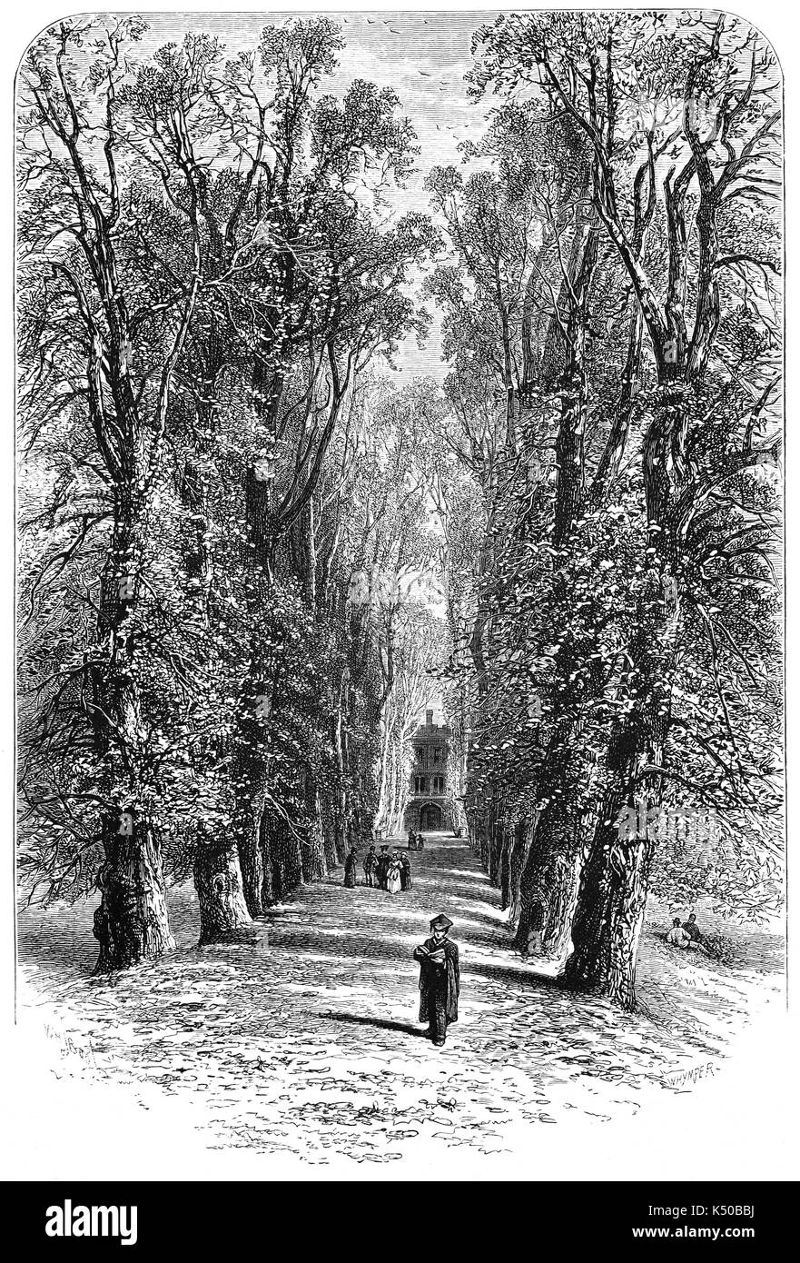1870:  The Avenue of lime and cherry trees, in Trinity College, University of Cambridge, England. - Stock Image