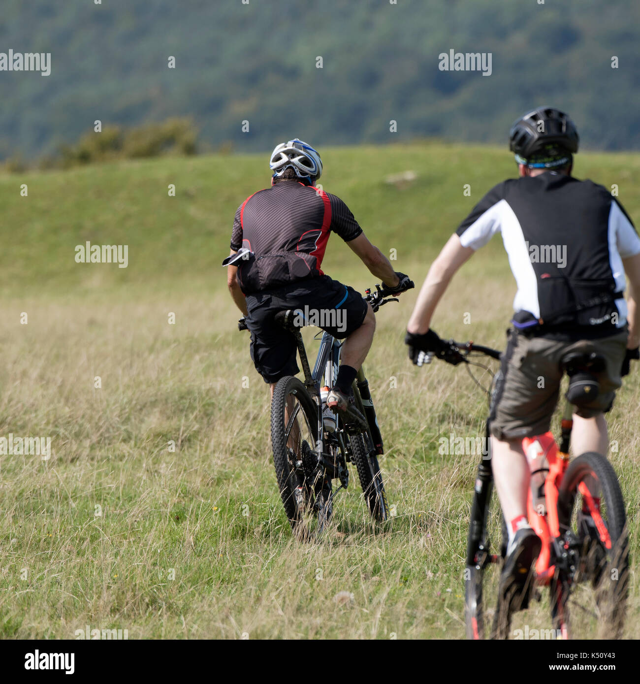 Minchinhampton Common in the southern Cotswolds Gloucestershire England UK. August 2017. Young men on mountain bikes Stock Photo