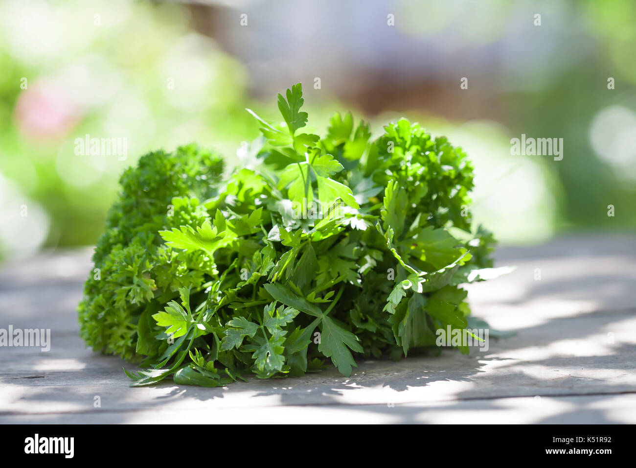 Parsley on wooden table. Farmers summer harvest still life. Selective focus, beautiful bokeh. - Stock Image
