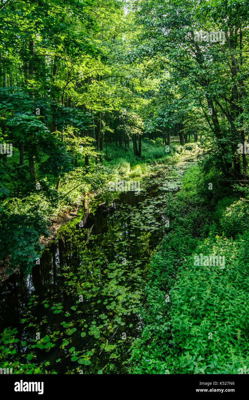 Lutownia river in Bialowieza National Park. July, 2017. - Stock Image