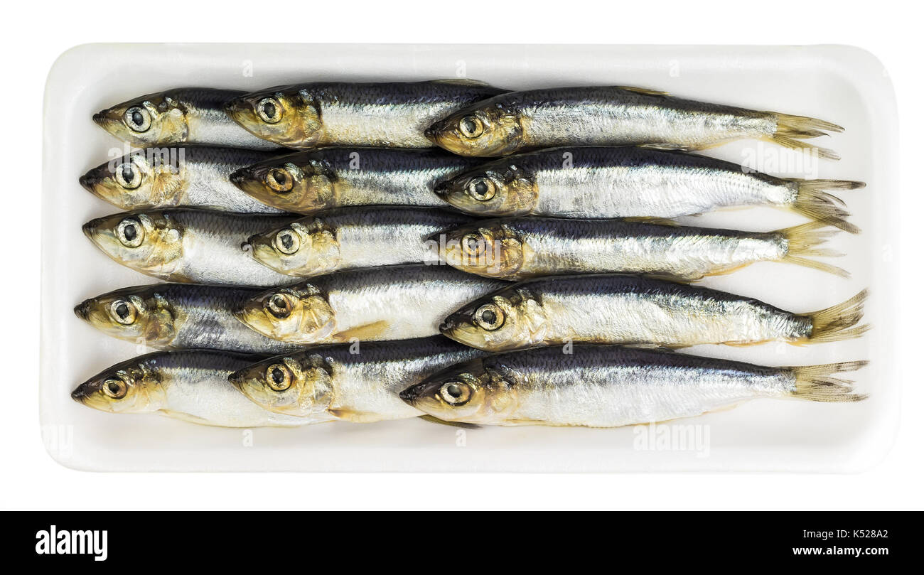 Fresh sprat decomposed on a substrate - Stock Image