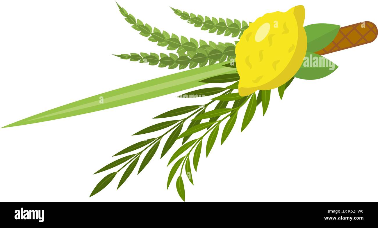 Sukkot set of herbs and spices of the etrog, lulav, Arava, Hadas. Isolated on white background. Vector illustration. - Stock Image