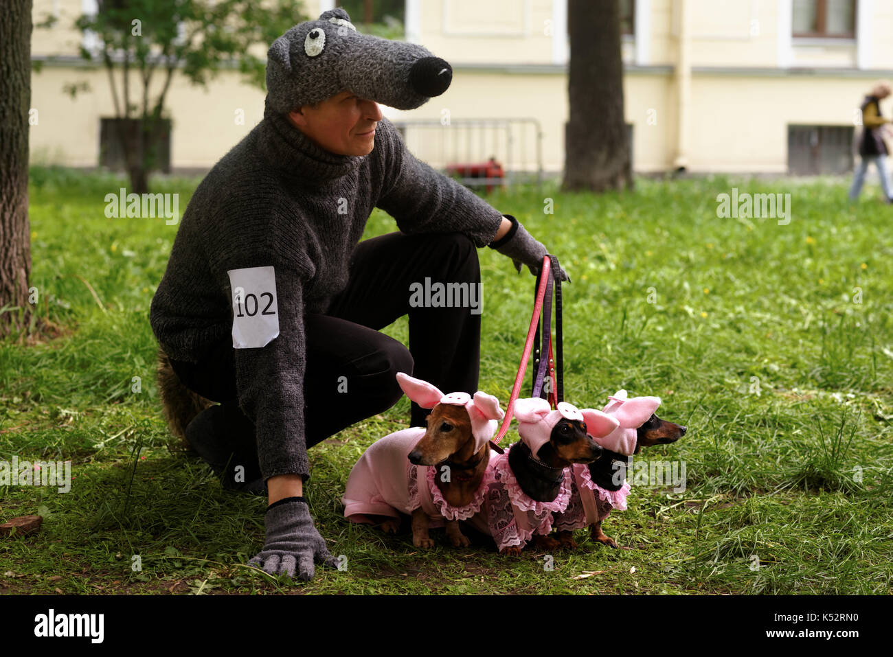 St. Petersburg Russia - May 28 2016 Man with his dogs in costumes of Three Little Pigs during Dachshund parade. The traditional festival is timed t & St. Petersburg Russia - May 28 2016: Man with his dogs in costumes ...