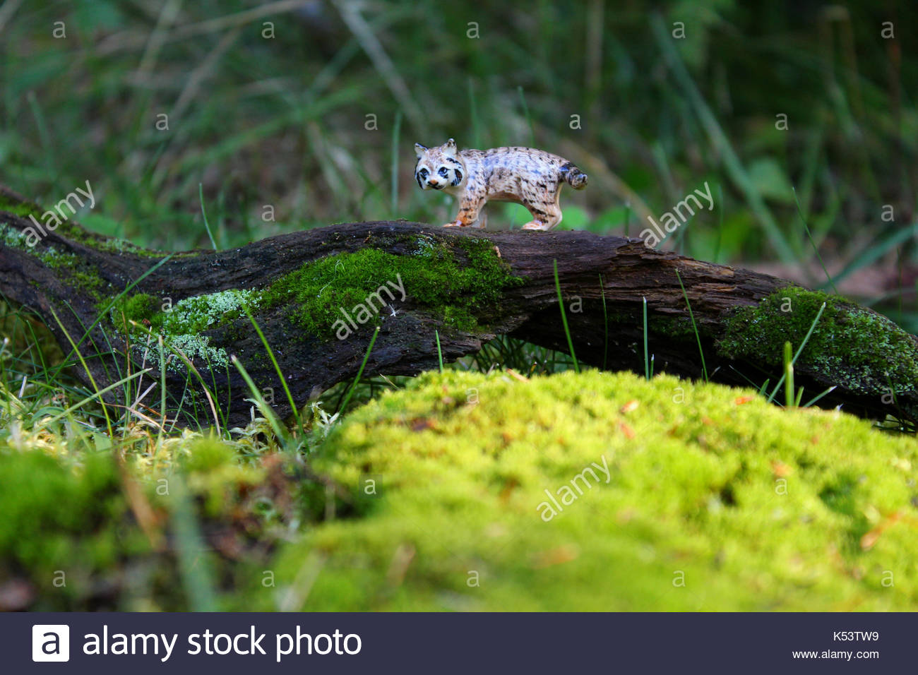 Mystical Miniature Bobcat - Stock Image
