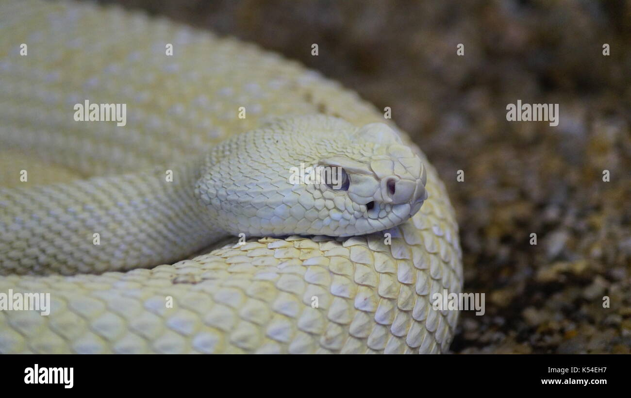 snakes in animal kingdom, a variety of venomous species that will surprise you by its beauty Stock Photo