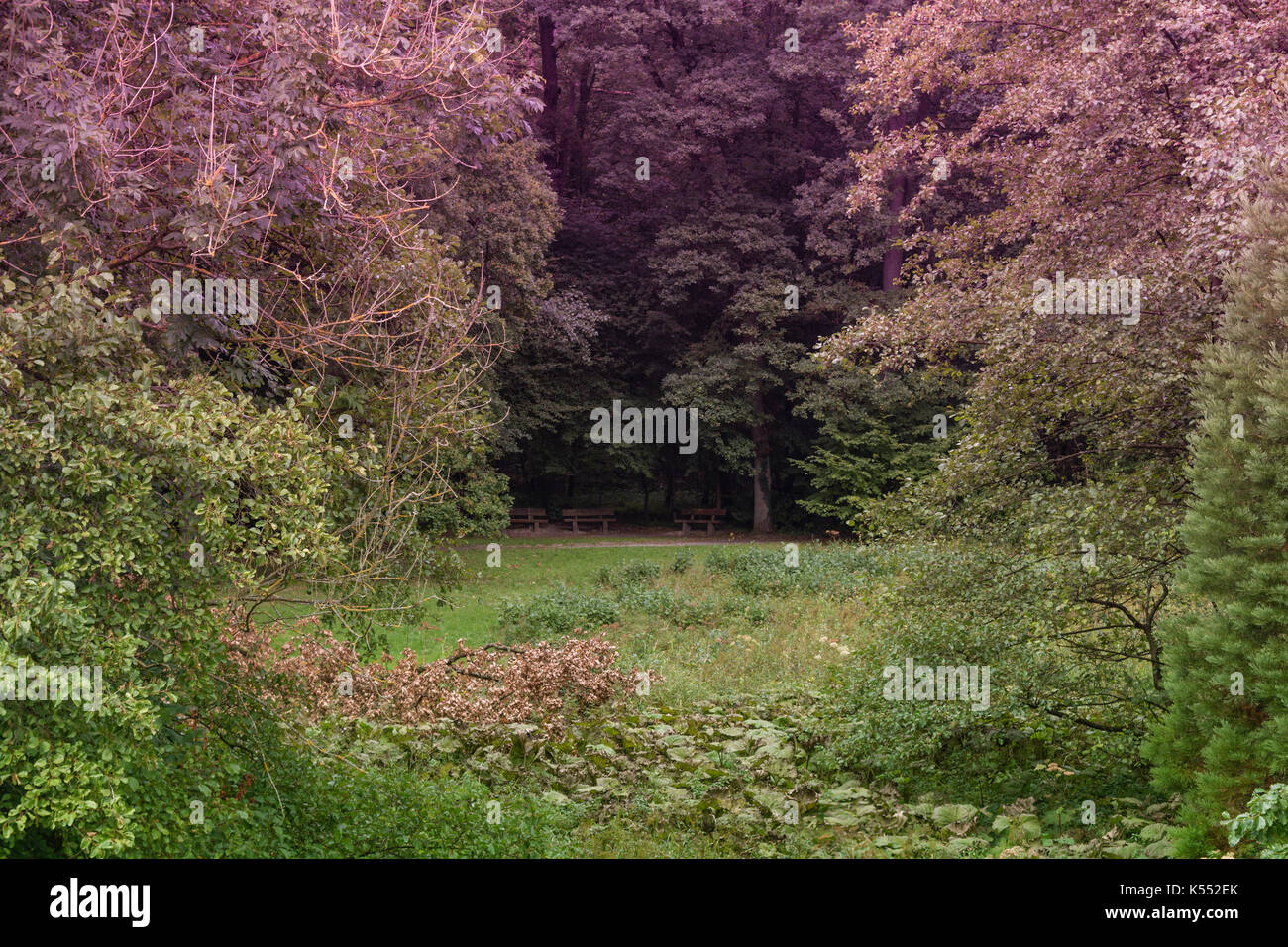 Three old benches in a forest clearing - Stock Image