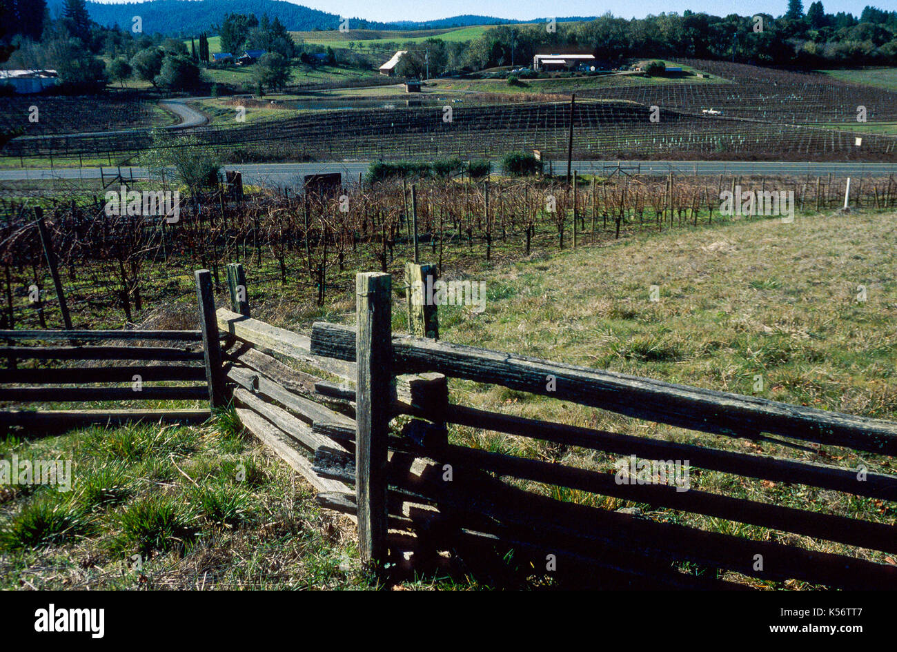 vineyards at Anderson Valley, Mendocino, CA - Stock Image