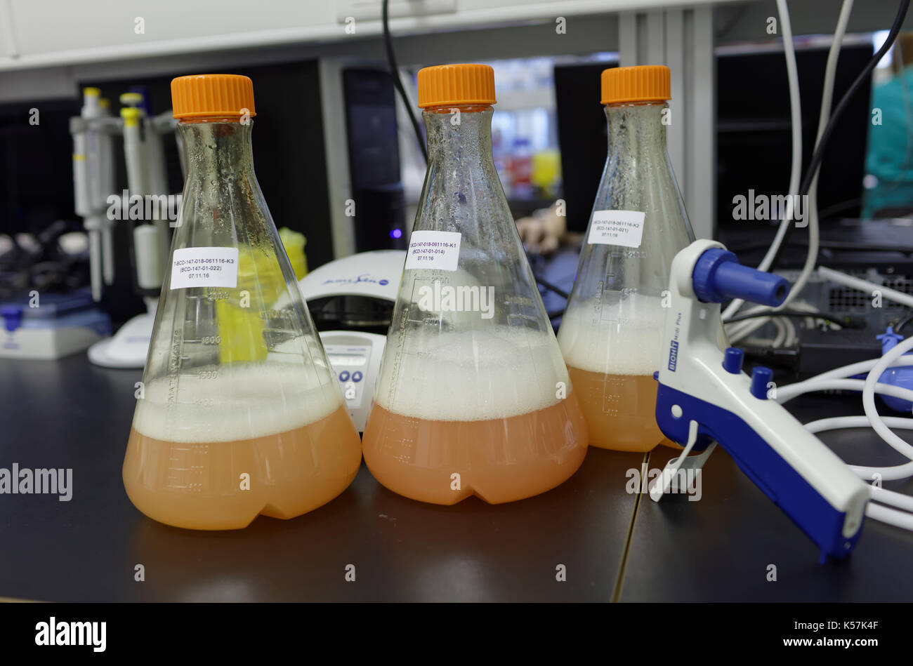 St. Petersburg, Russia - November 16, 2016: Flasks with culture liquids in the High-Throughput Biotechnology Laboratory of BIOCAD. It is one of the wo - Stock Image