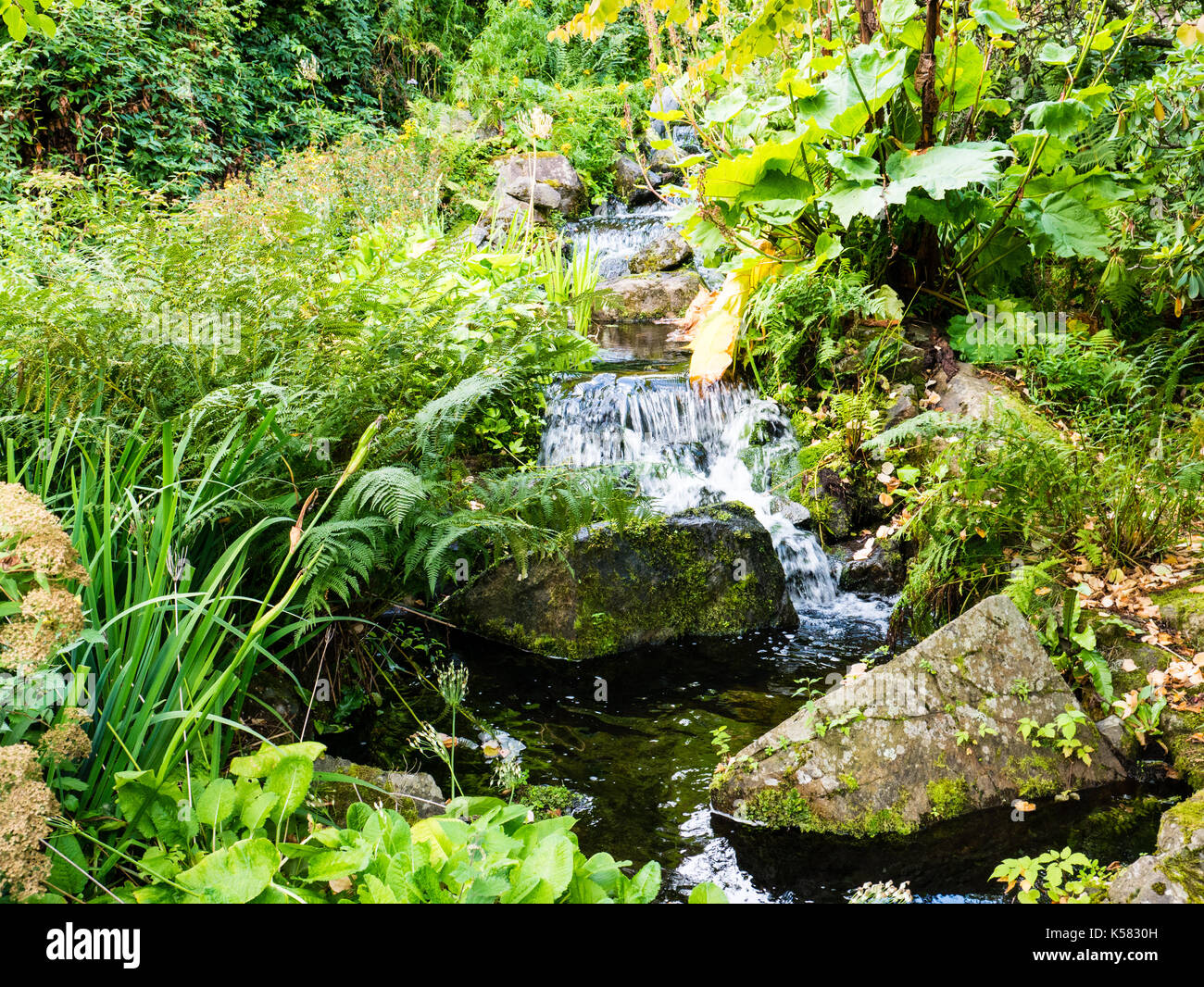 Chinese Hillside, Royal Botanic Garden Edinburgh, Edinburgh, Scotland, UK, GB. Stock Photo