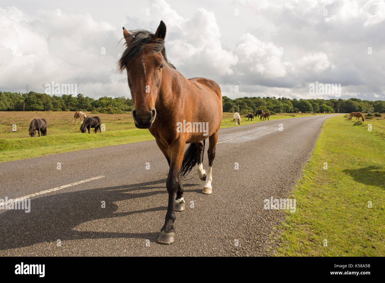Bramble Hill, New Forest National Park, Hampshire, UK. 8th Sep, 2017. The weather brings sunshine and showers during the afternoon. A westerly air flow carrying rain showers, some heavy and thundery is established over the south west and central southern England. Credit: Paul Biggins/Alamy Live News - Stock Image