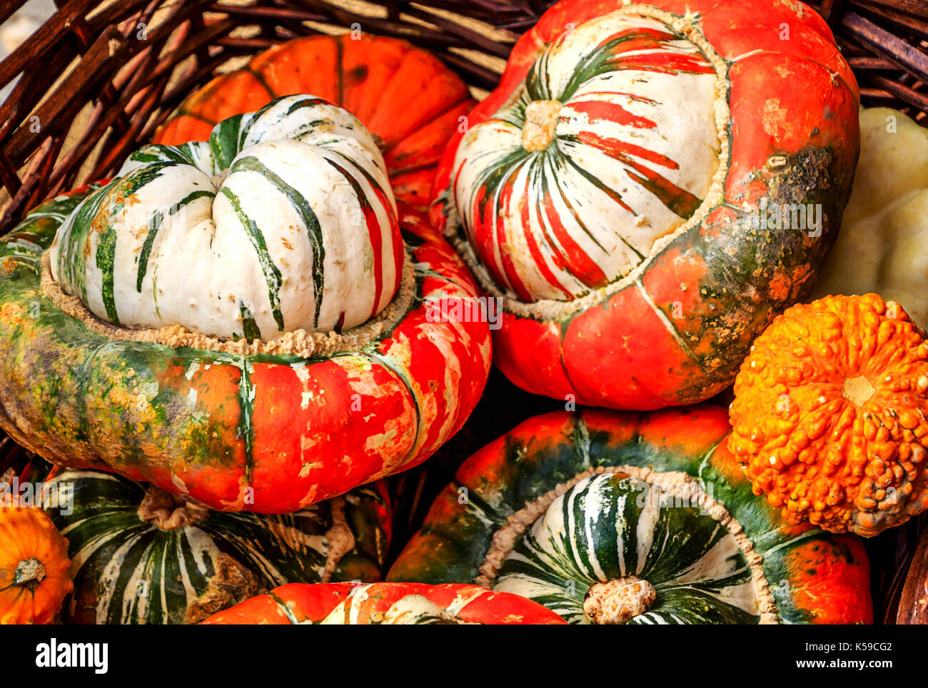 "Big and beautiful ""Turks Turban"" or French Turban Squashes Stock Photo"