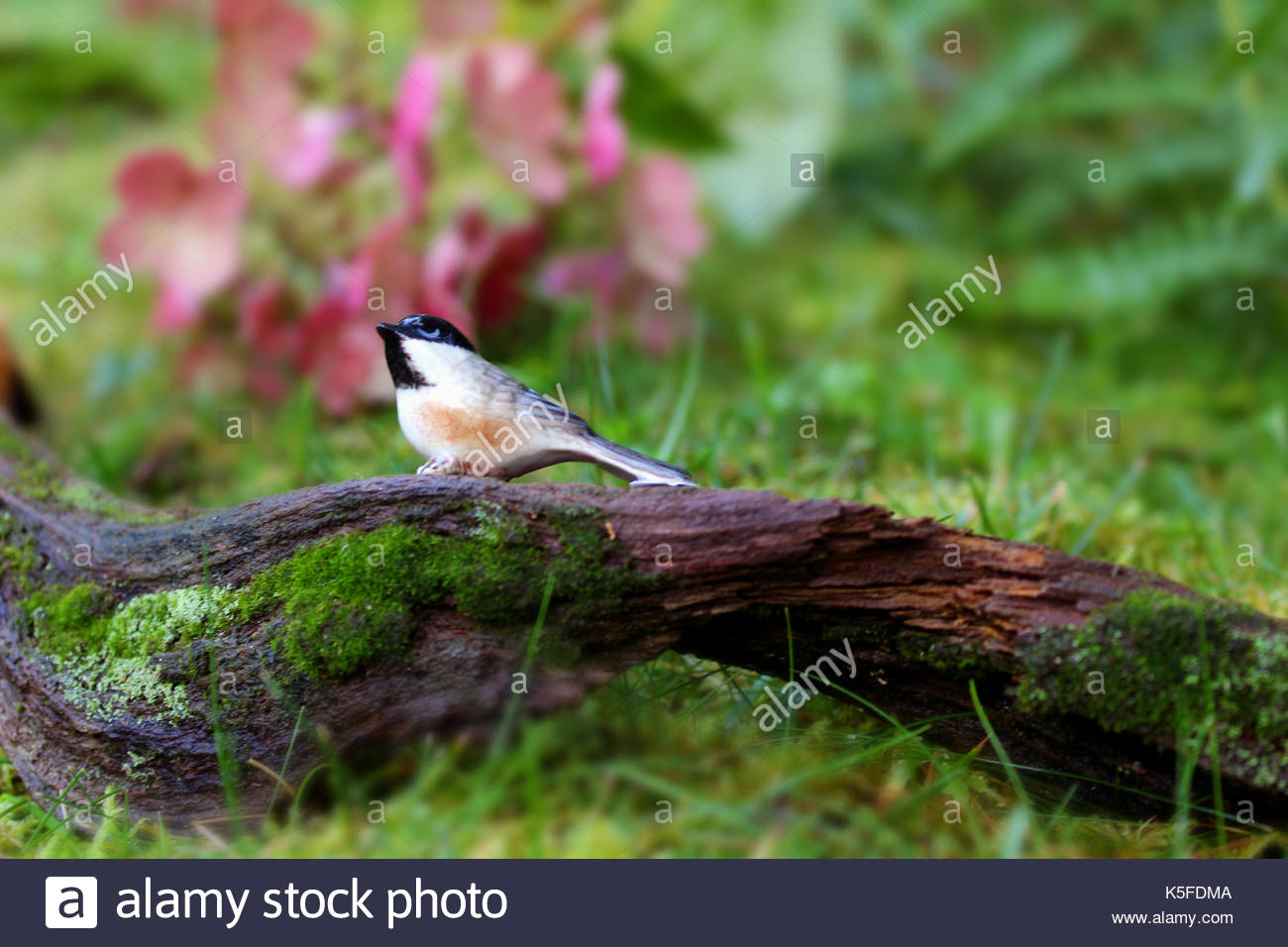 Chickadee  Mystical Garden - Stock Image