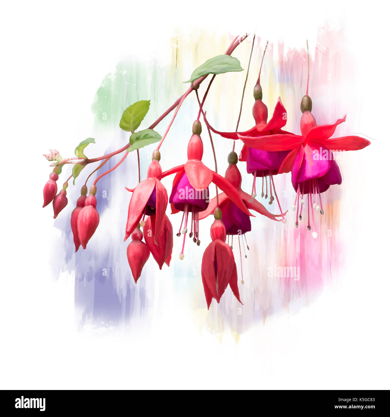 Red Fuchsia Flowers Stock Photos & Red Fuchsia Flowers Stock Images ...