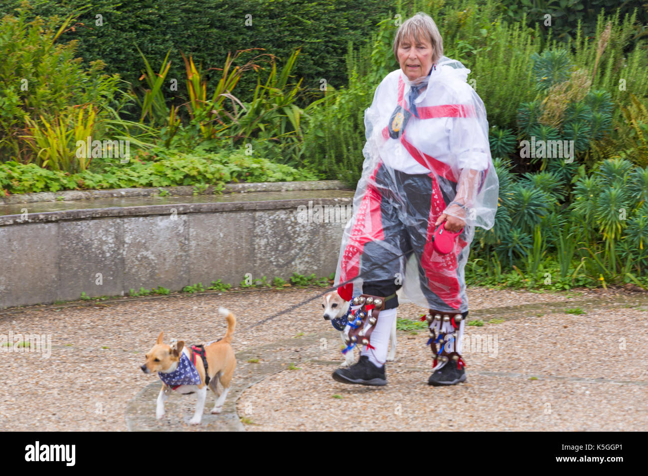 Swanage, Dorset, UK. 9th Sep, 2017. UK weather: heavy rain and thunder at Swanage. Female Morris dancer walking dogs wearing transparent poncho for protection from the rain. Credit: Carolyn Jenkins/Alamy Live News - Stock Image