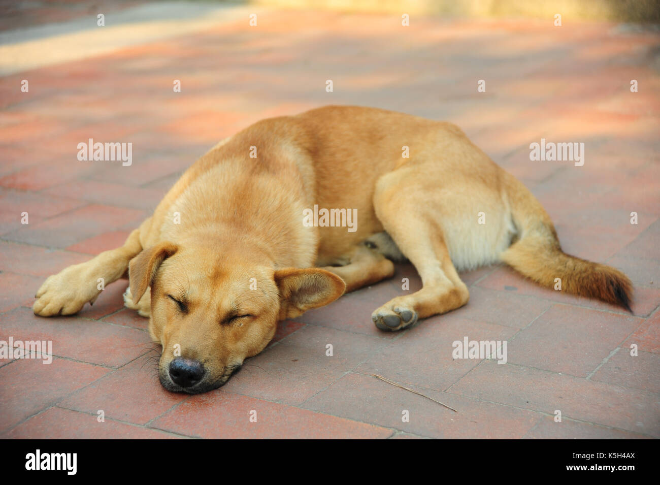 Dog sleeping on the floor. - Stock Image