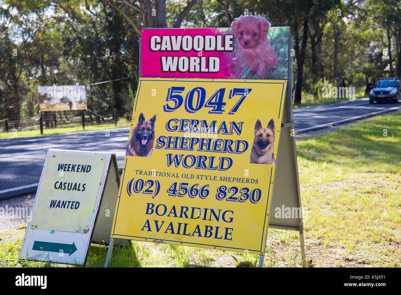 Australian dog breeder selling cavoodles and german shepherd alsatian dogs,Australia - Stock Image