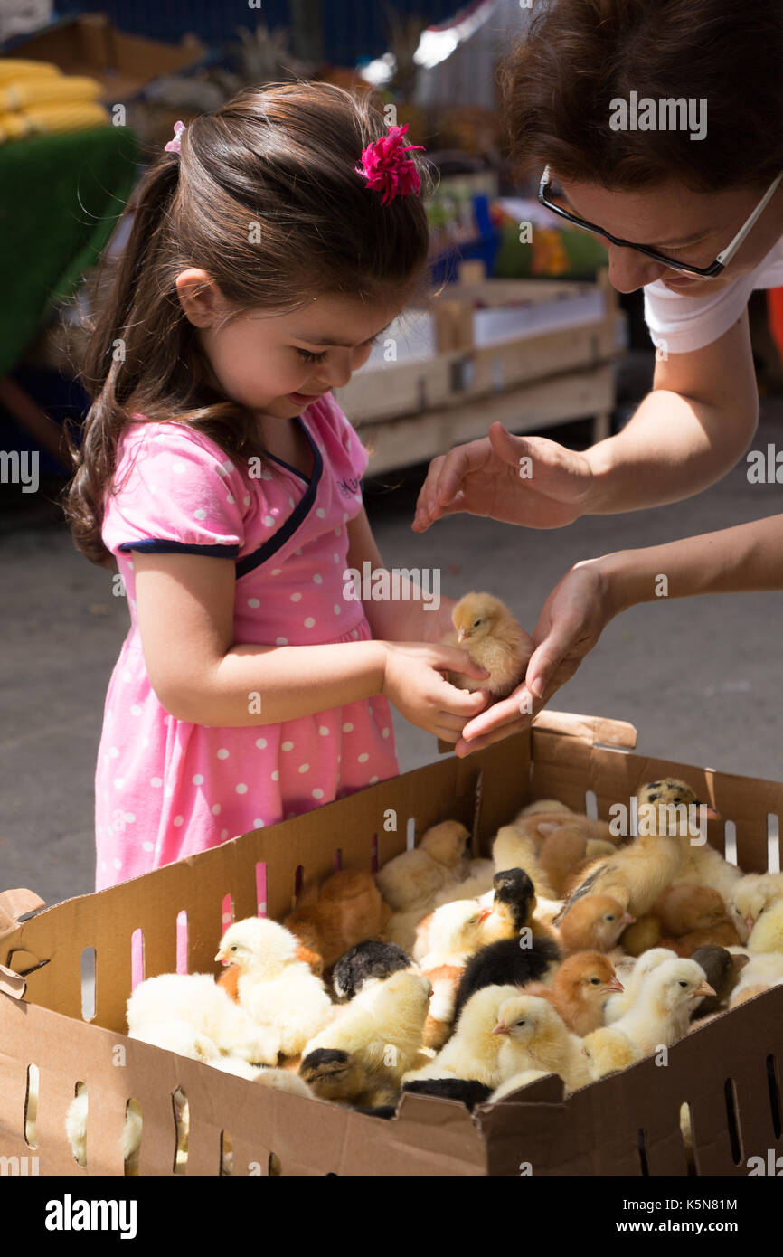 Istanbul, Turkey - Mar 31, 2016: Little girl admires chicks in bazaar at Tarihi Sali Pazari - Stock Image