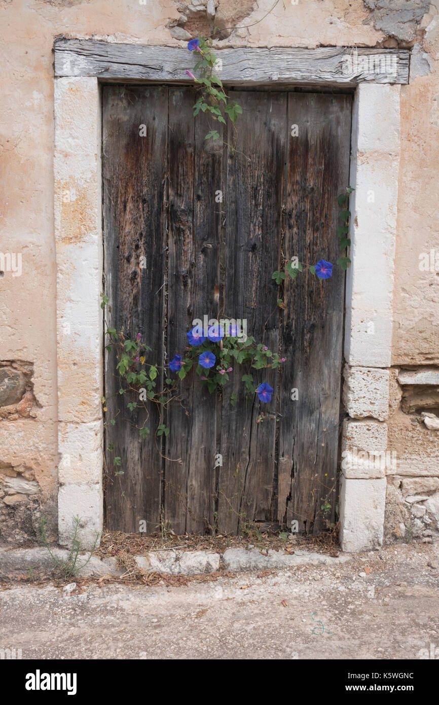 Simple, traditional wooden door in a street of small old houses. Morning glory, convolvulous, Ipomoea, growing through gaps, Assos, Kefalonia, Greece - Stock Image