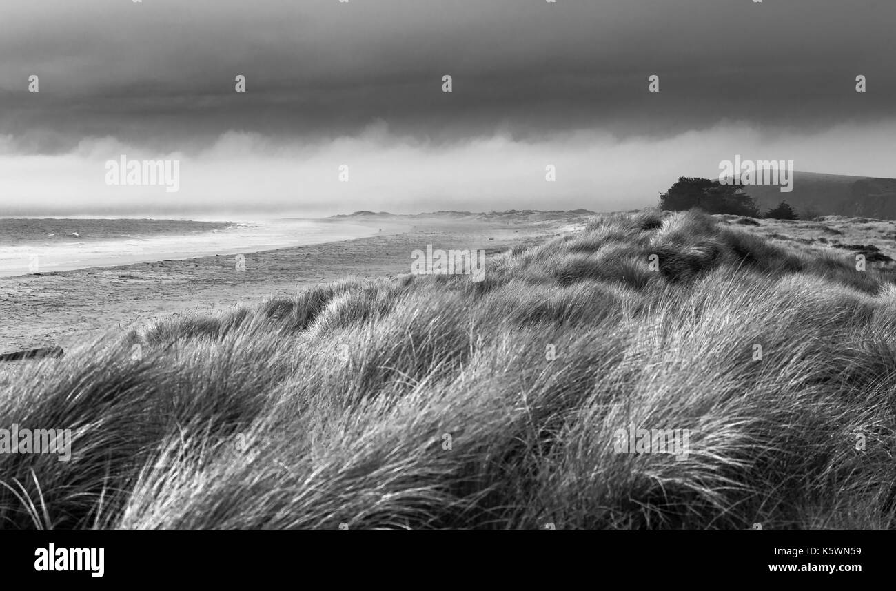 California windswept beach - Stock Image