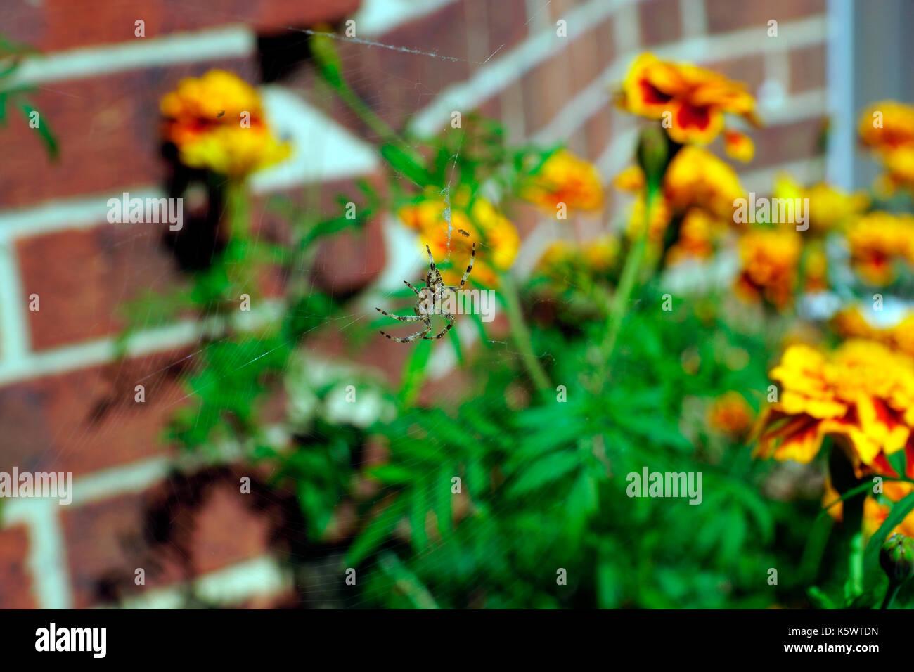 Wasps Bite Stock Photos Amp Wasps Bite Stock Images Alamy