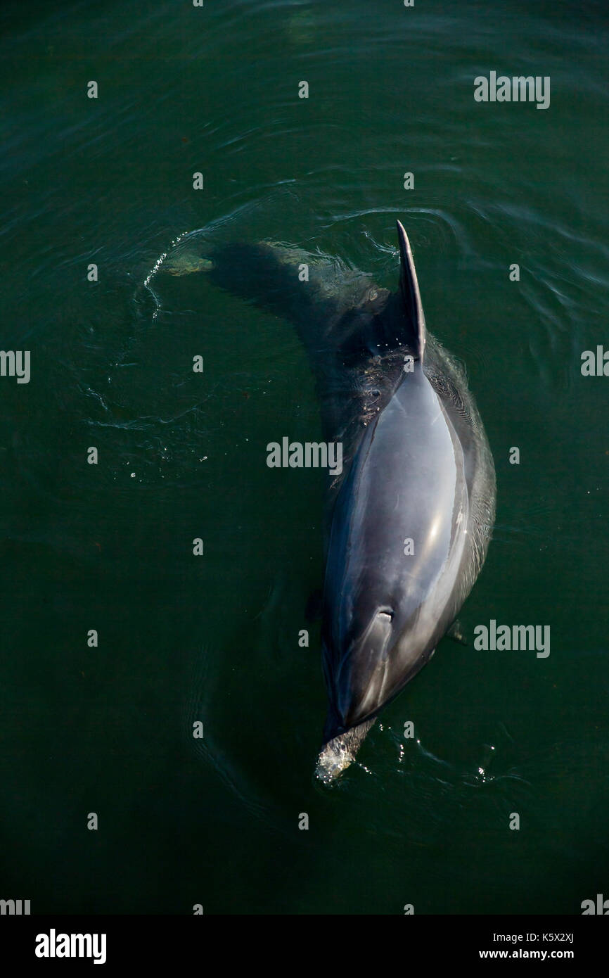 Dolphins Ireland Stock Photos & Dolphins Ireland Stock Images - Alamy