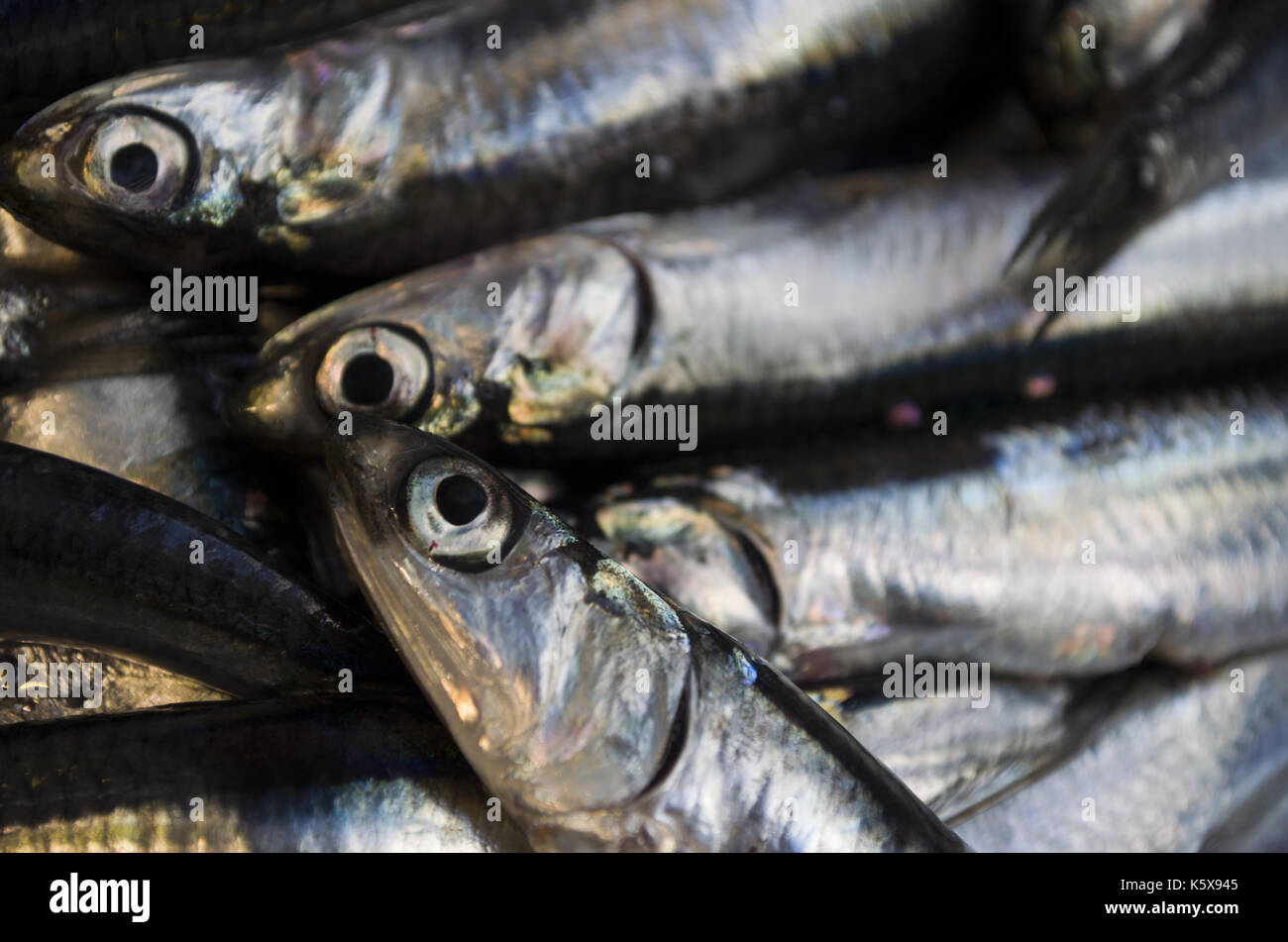 Fresh anchovy - Stock Image