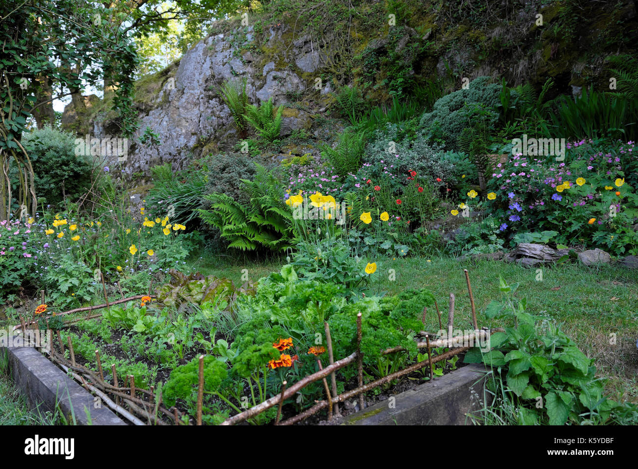 A small country cottage flowers and various vegetables garden growing in a raised bed in spring in rural Carmarthenshire, Wales UK   KATHY DEWITT - Stock Image