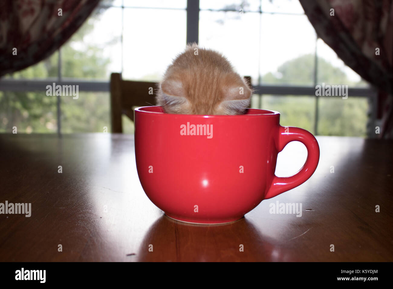 Kitten And Cup High Resolution Stock Photography And Images Alamy