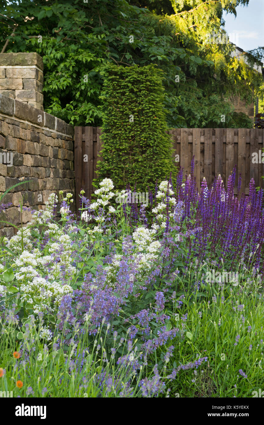 Beautiful, private, traditional, landscaped, country garden, West Yorkshire, England, UK - summer flowering plants in close-up on herbaceous border. - Stock Image
