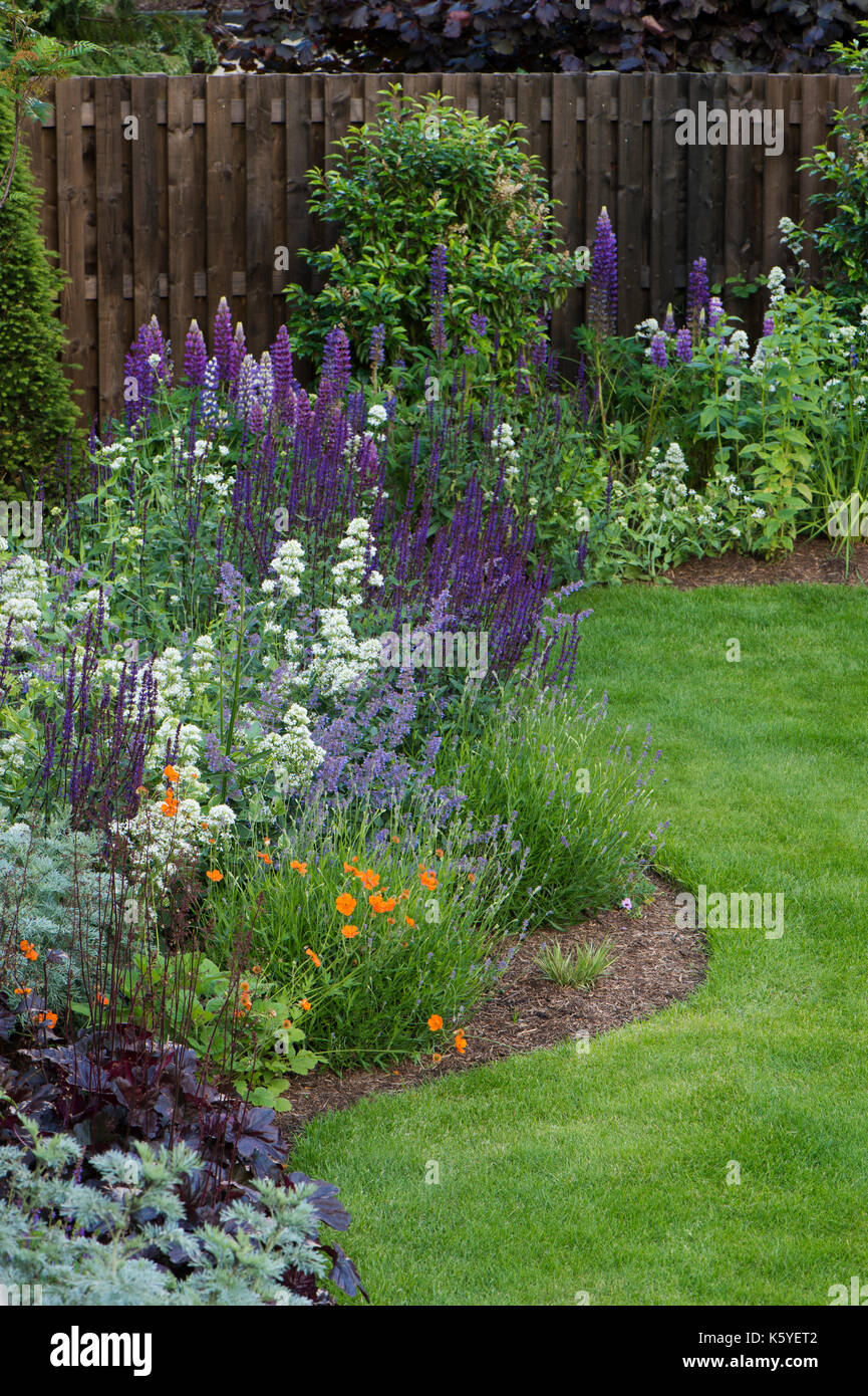 Beautiful, private, traditional, landscaped, country garden, West Yorkshire, England, UK - summer flowering plants in close-up on herbaceous border - Stock Image