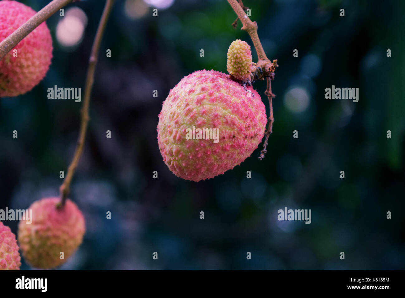 Simply Litchi - Stock Image