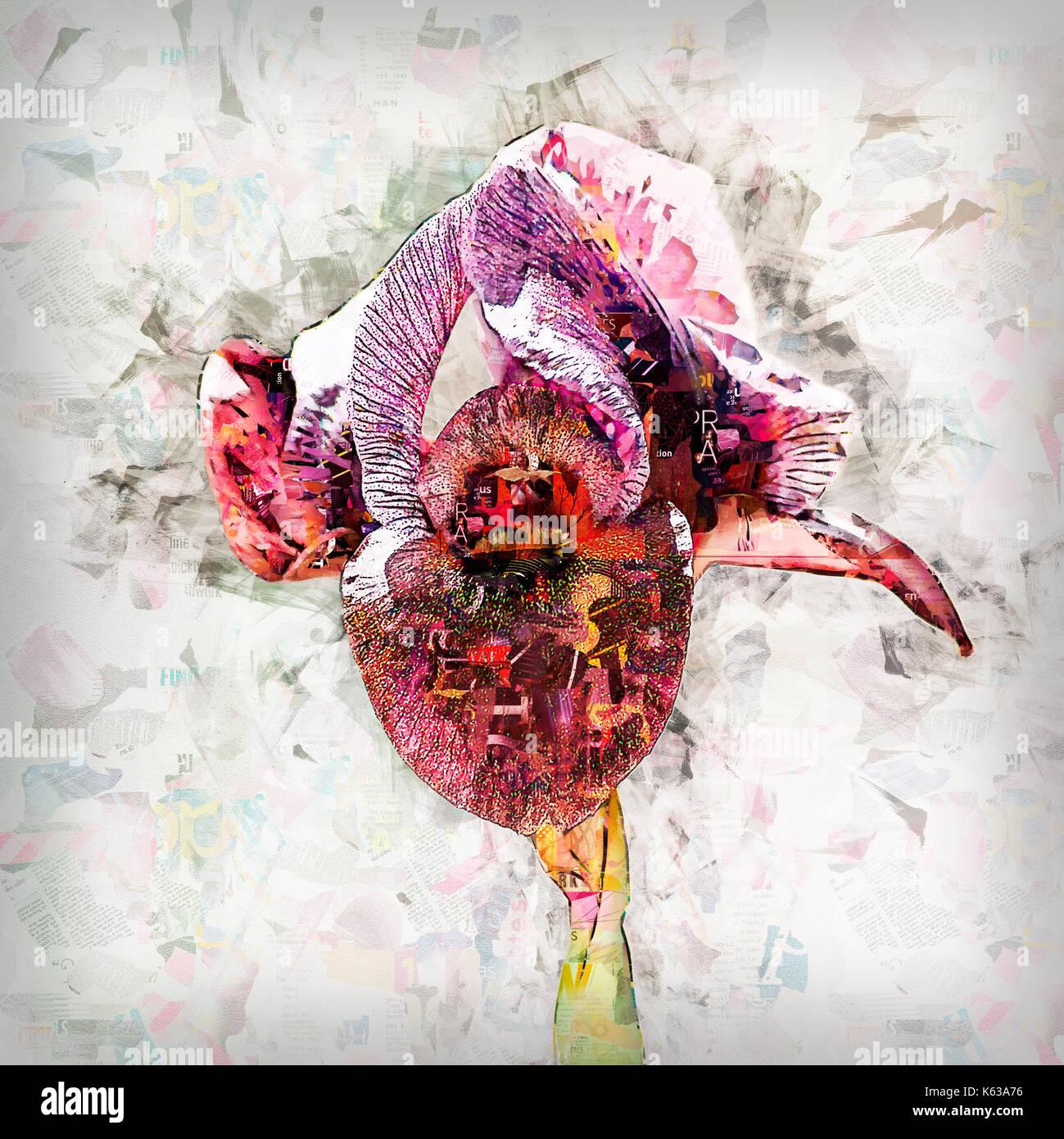 Digitally enhanced image of Iris petrana, (Petra Iris or Yeruham Iris) in natural habitat. Photographed in Israel, Negev near Yeruham - Stock Image