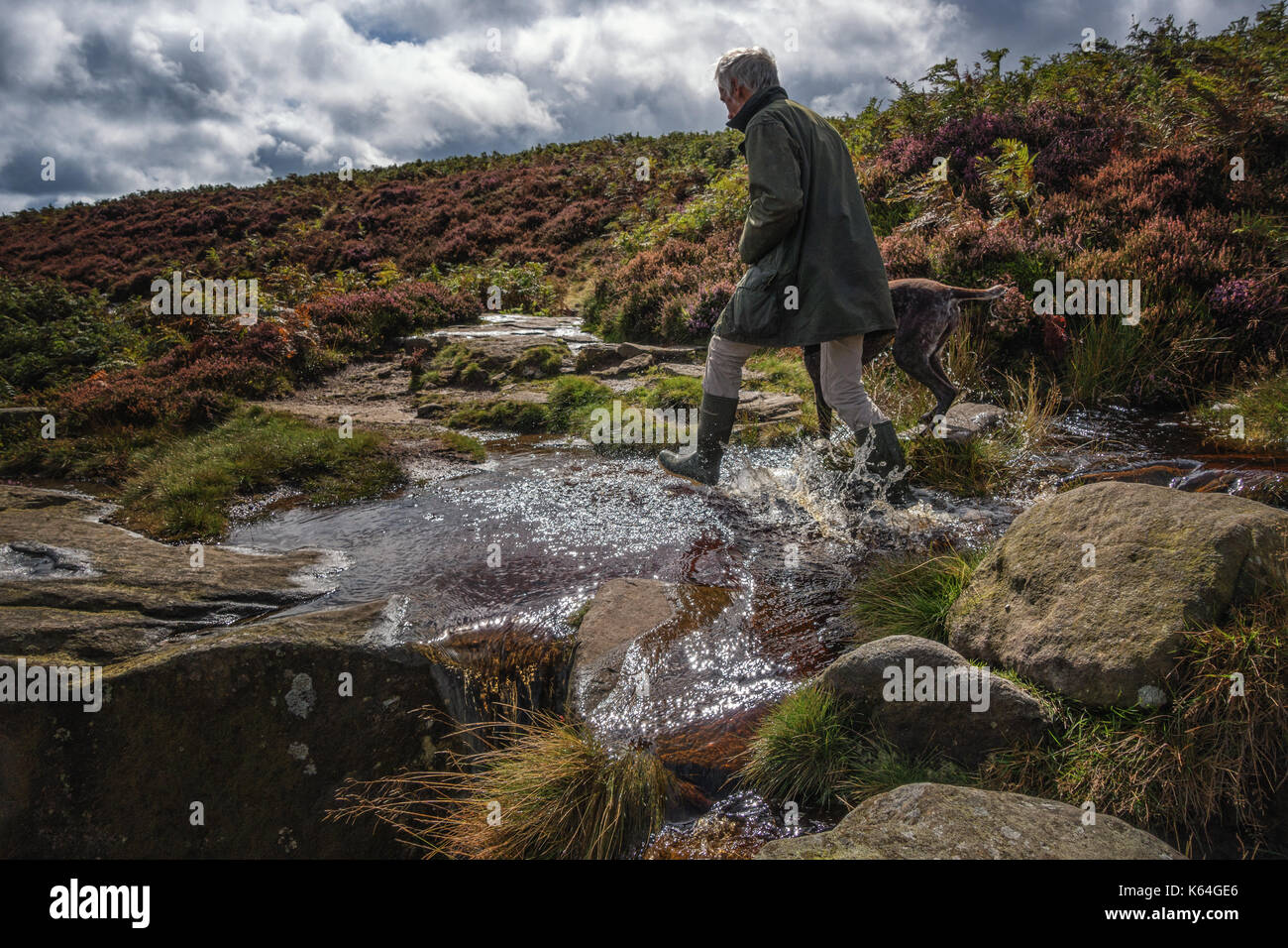 Ilkley, West Yorkshire, UK. 11th Sep, 2017. UK Weather. Splashing through puddles on Ilkley Moor - a dog walker person enjoys an autumnal, sunny countryside walk in wellington boots on moorland path awash with rainfall runoff. Credit: Rebecca Cole/Alamy Live News - Stock Image