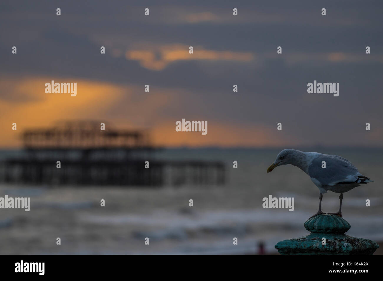 Brighton, UK. 11th Sep, 2017. UK Weather. The sunset breaks through the clouds over the remains of the old pier watched by unimpressed seagulls - Dusk on a blustery evening on Brighton Beach. Credit: Guy Bell/Alamy Live News - Stock Image