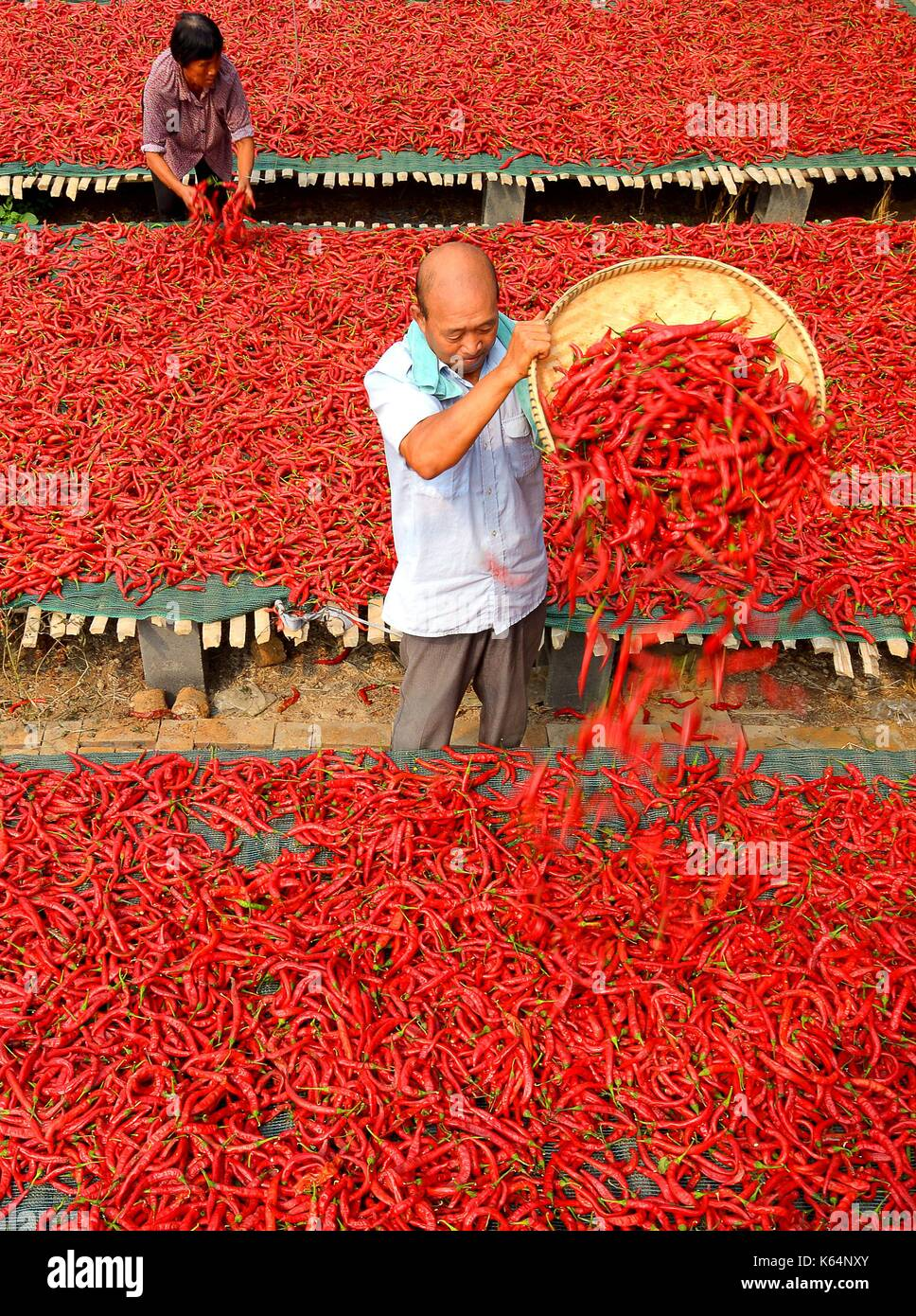 Handan, China's Hebei Province. 11th Sep, 2017. A villager airs chillies in Weiqing Village of Jize County in Handan, north China's Hebei Province, Sept. 11, 2017. Credit: Wang Xiao/Xinhua/Alamy Live News - Stock Image