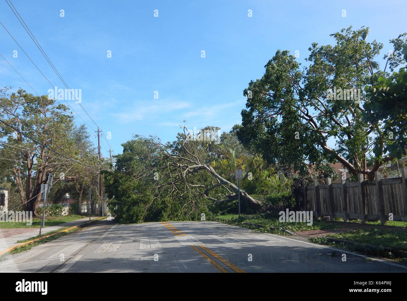 Miami, United States. 12th Sep, 2017. A fallen tree on a road after Hurricane Irma, in the Kendall district of Miami, Florida, USA, 11 September 2017. Florida has dawned and confirmed the bad omens given by meteorologists on the destructive power of Hurricane Irma, which has already claimed at least six deaths in Florida, three in Georgia and one in South Carolina and keeps more than 6.7 millions of properties in the dark. Credit: Latif Kassidi/EFE/Alamy Live News - Stock Image