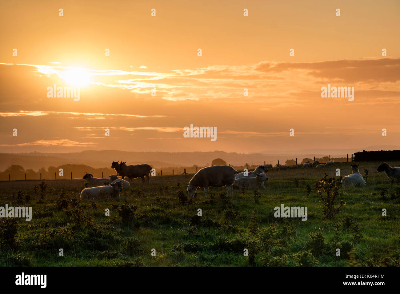 Teesdale, County Durham UK. Tuesday 12th September 2017. UK Weather. Red sky in the morning shepherds warning. The calm before Storm Aileen this morning as a weather warning for winds of up to 75 miles per hour in exposed places is issued for Northern England. Credit: David Forster/Alamy Live News - Stock Image