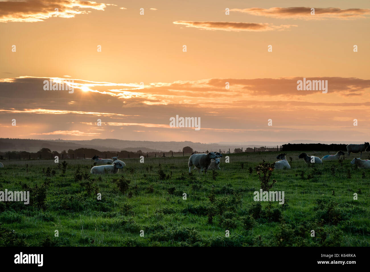 Teesdale, County Durham UK. Tuesday 12th September 2017. UK Weather. Red sky in the morning shepherds warning. The Stock Photo