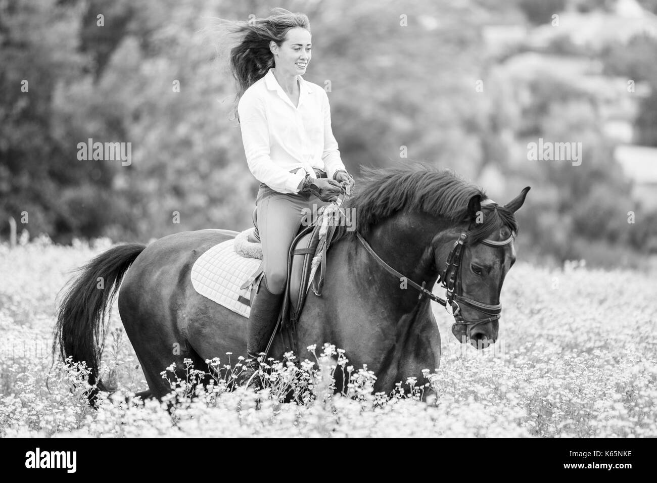 Young rider girl with long hair riding bay horse on camomile field - Stock Image