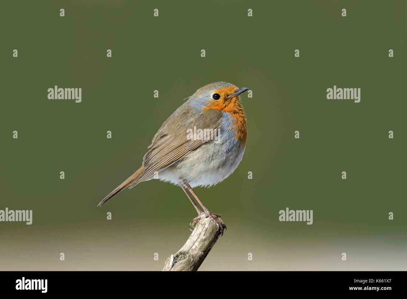 bird feeder, birdfeeder, feeder, winter, peanuts, nuts, food, feeding, eat, eating - Stock Image
