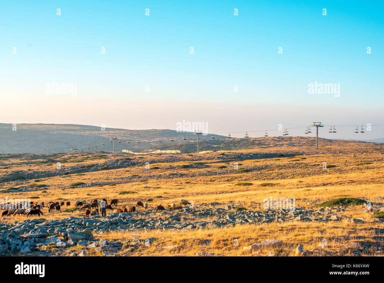 Ski slope without snow with shepherd and his sheep - Stock Image