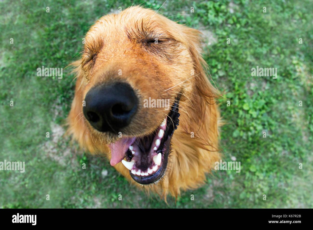 Bardzo dobry walk with dog 032 Stock Photo: 158753011 - Alamy EV64
