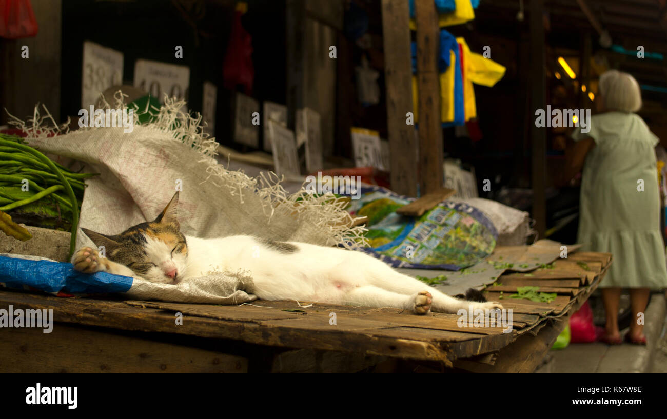 A cat napping in the afternoon, oblivious to the market scene on the background - Stock Image