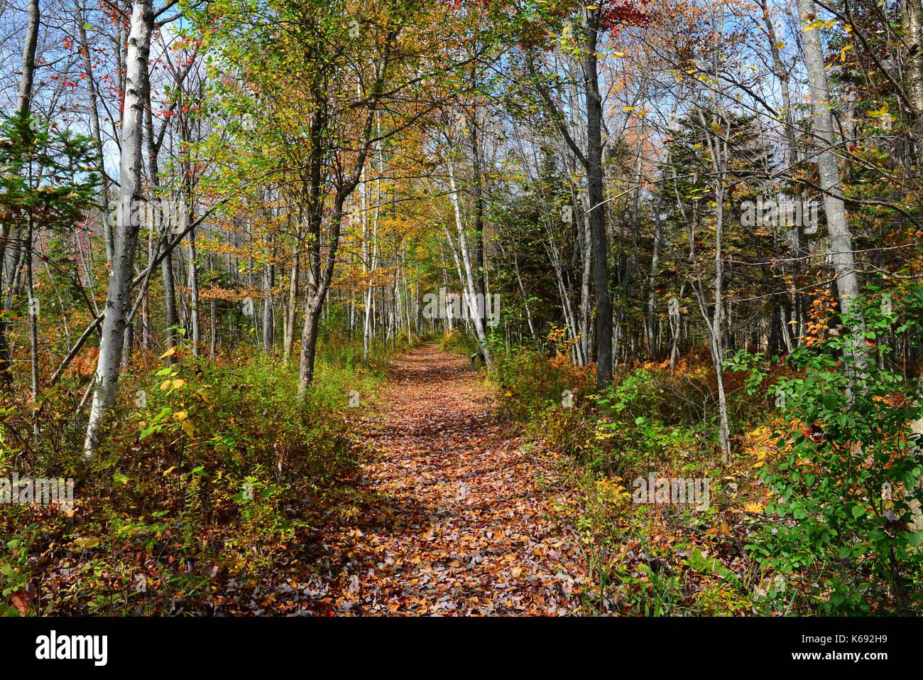 Sacandaga Pathway trail through the Adirondack wilderness in autumn in Speculator, New York, NY USA. - Stock Image