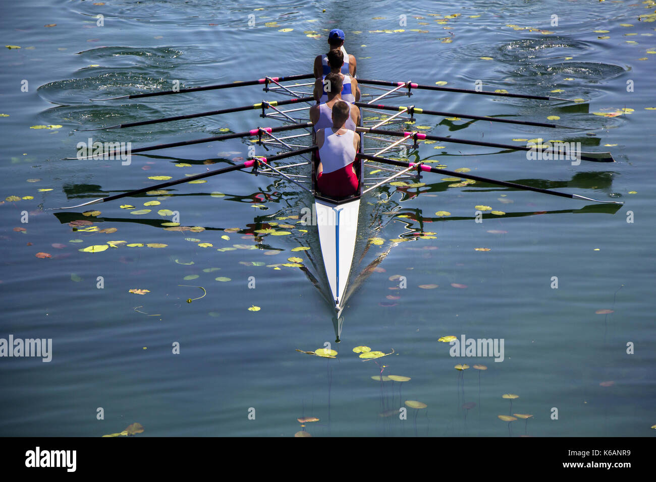 Males fours rowing team in race on the lake - Stock Image