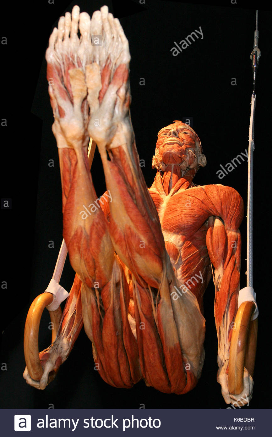 Gunther Von Hagens Anatomy For Beginners Image collections - human ...
