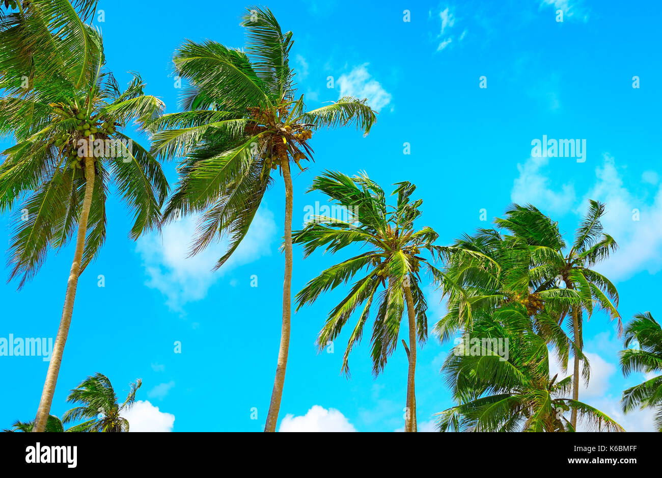 high palm on background of blue sky - Stock Image