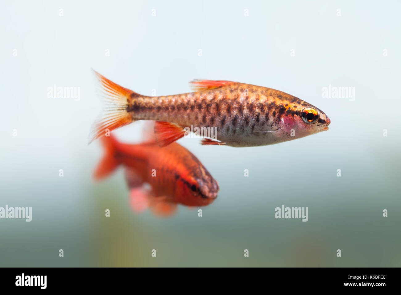 Tropical Fish Tank Stock Photos & Tropical Fish Tank Stock Images ...