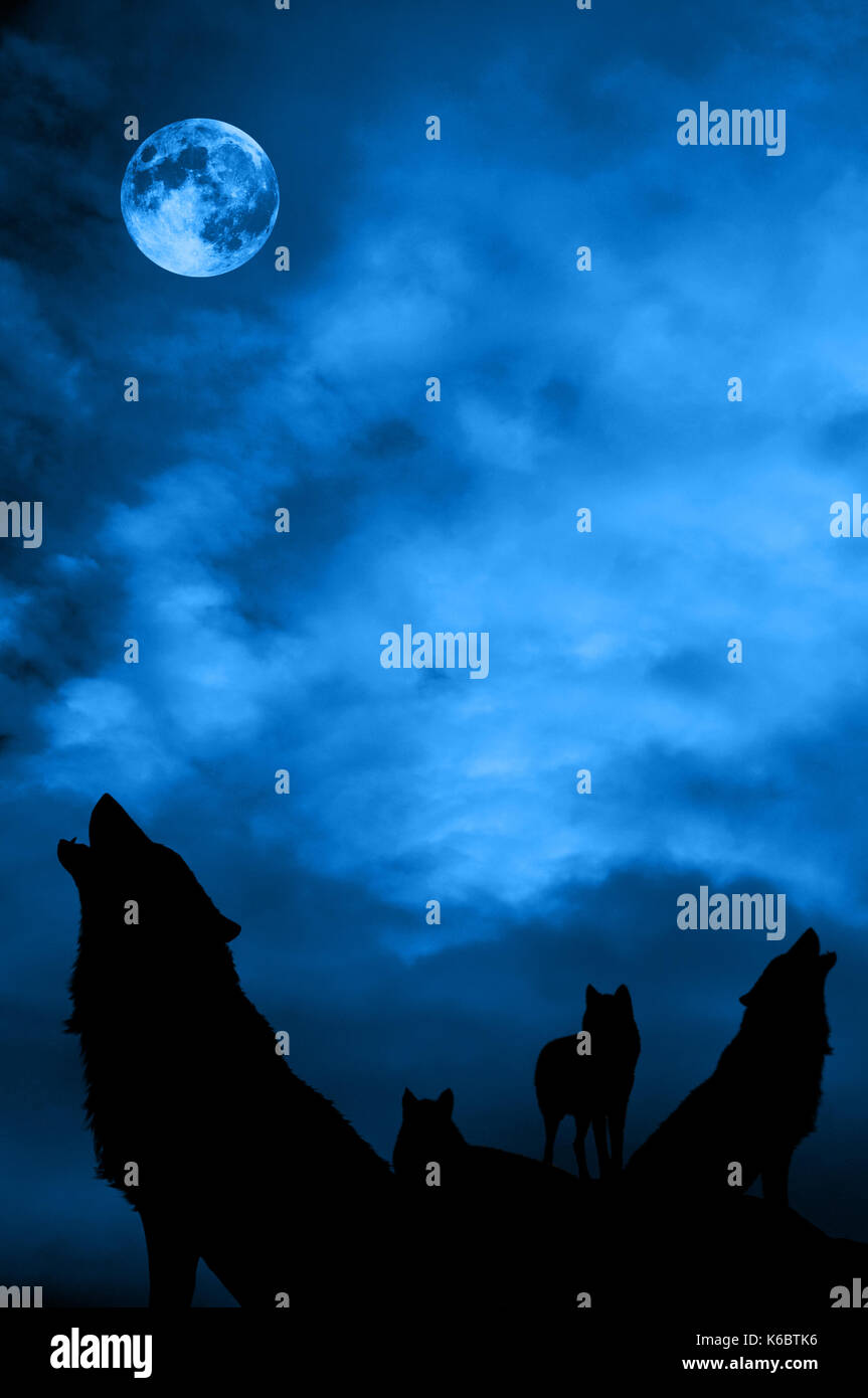 wolves pack at night howling to the moon - Stock Image