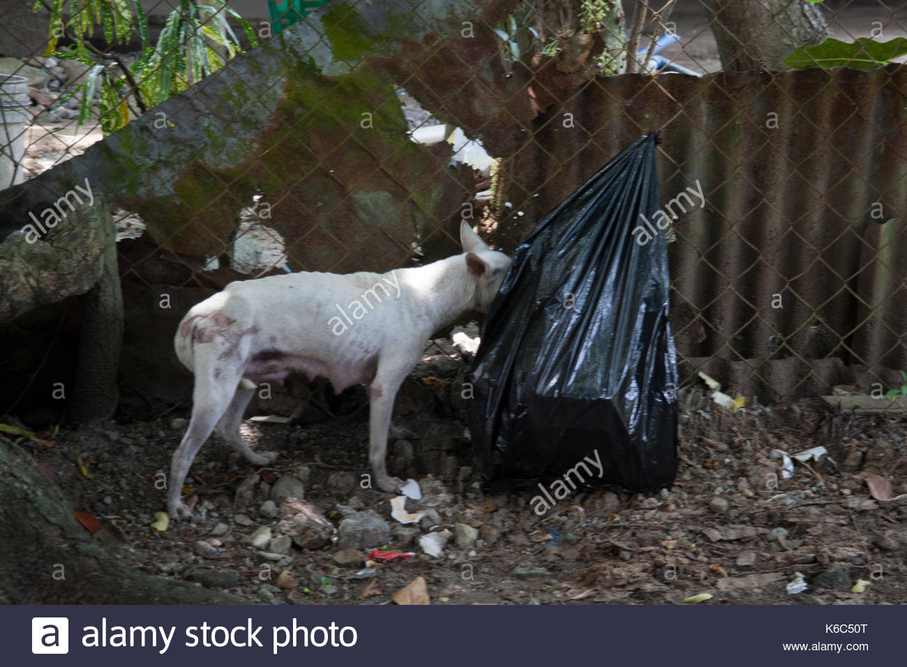 stray dog is looking for food in a rubbish bag - Stock Image